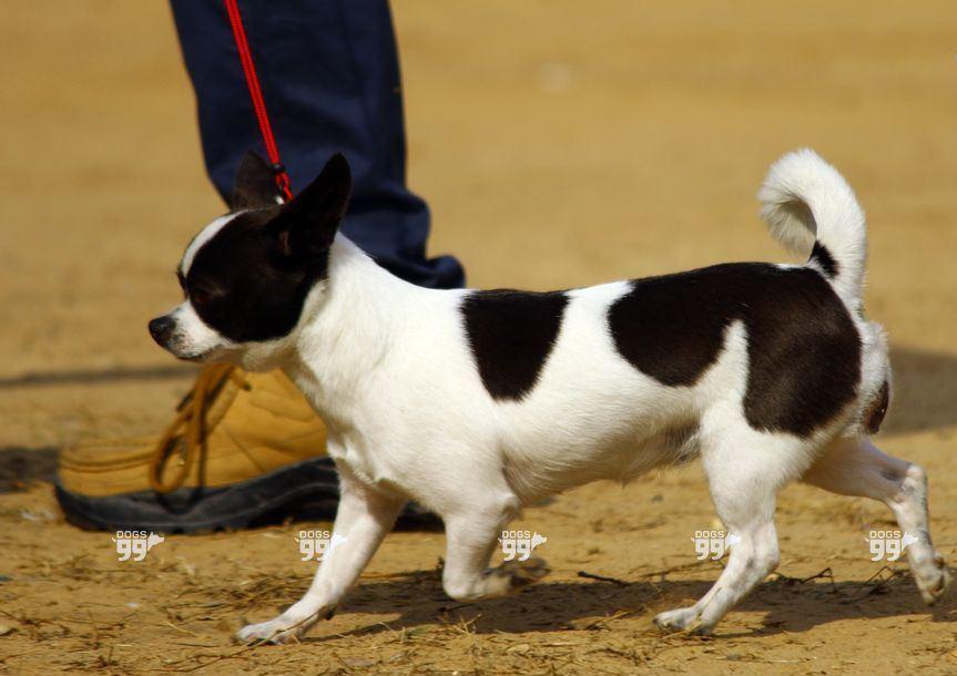 Dog show in chandigarh_3