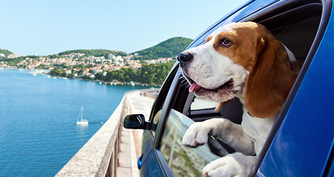 Guide-to-Traveling-With-Your-Pet
