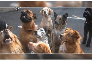 New Rules To Regulate Dog Breeders