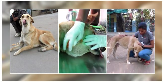 Stray Dog's Life Saved