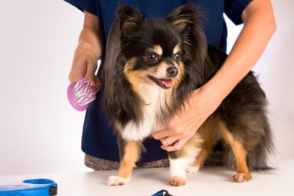 grooming-dog_fvqbmz