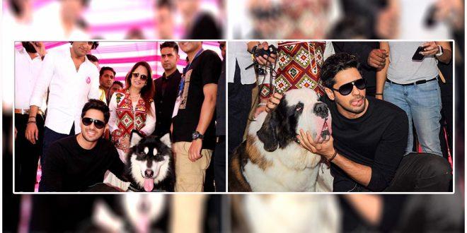 sidharth malhotra glam dogs show