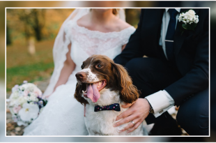 Dog Carrying Wedding Rings DogExpress