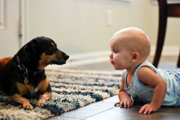 Dogs can help boost children's immune systems