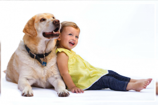 Dog with kid