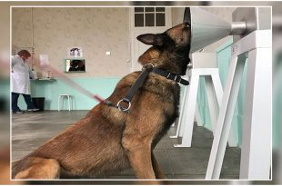 German Shepherds Detect Breast Cancer