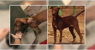Rescued acid dog