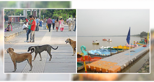stray dogs at Sukhna Lake