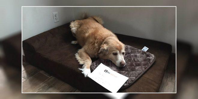 dog tiny bed
