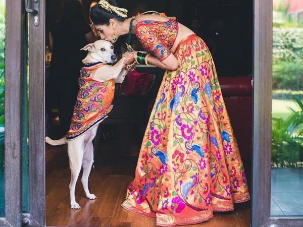 dog in Indian wedding