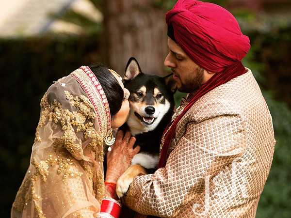 8 adorable pooches in indian weddings dogexpress