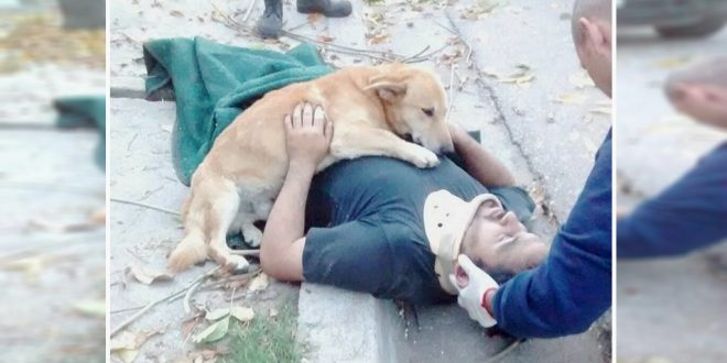 Pet Dog Refuses To Leave Injured Owner's Side