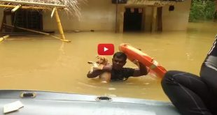 Indian Navy Saves Dogs From Sri Lankan Floods