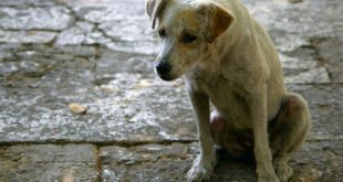 Stray Dogs Eradication Group