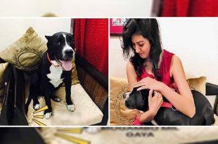 dog stolen chandigarh