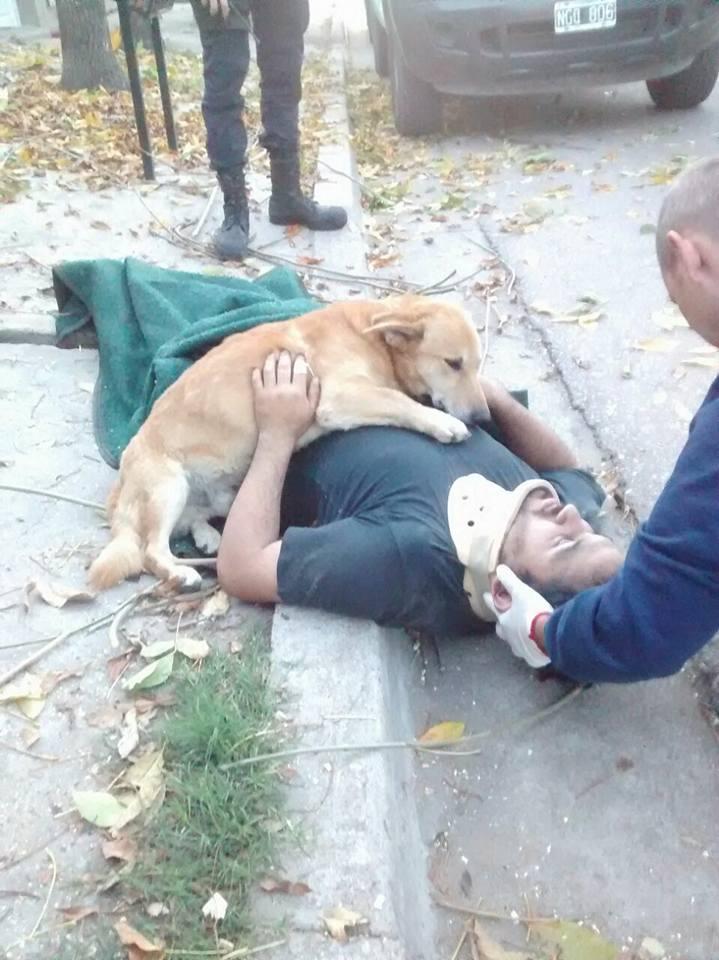 pet dog hugs owner