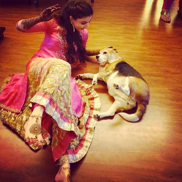 Dogs in Indian wedding