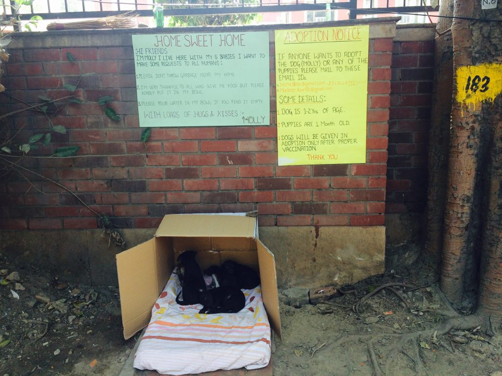 Dog shelter in college