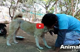 Animal aid unlimited rescue a dog