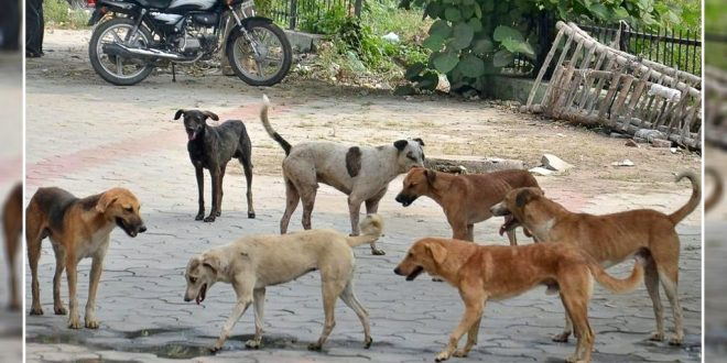 stray dogs in Chandigarh jpg
