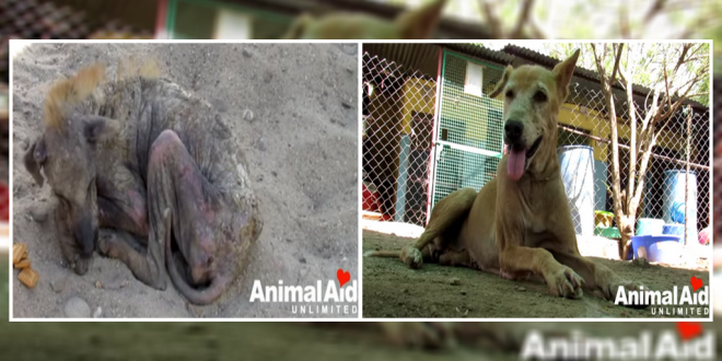 Dying street dog in India