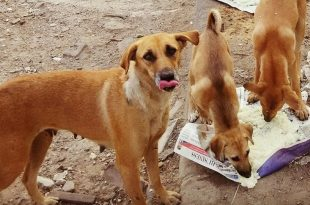 Feed Stray Dogs But Ensure They Don't Trouble Other People