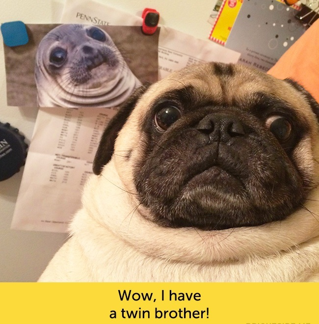 Dogs With Funny Facial Expressions Dogexpress