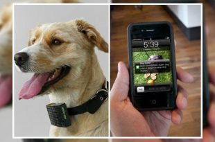 Pet Translator Devices
