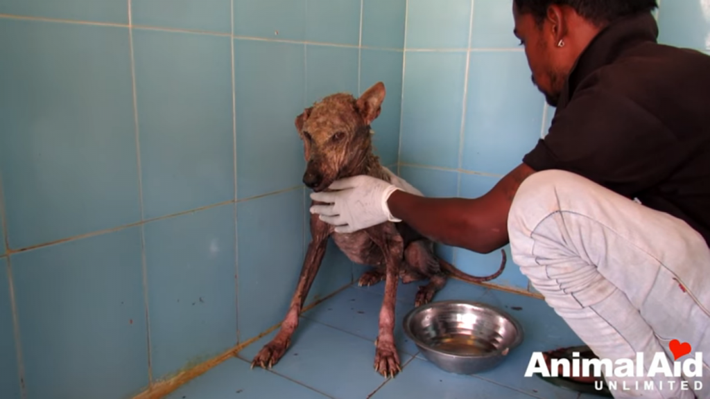 Stray dog in India