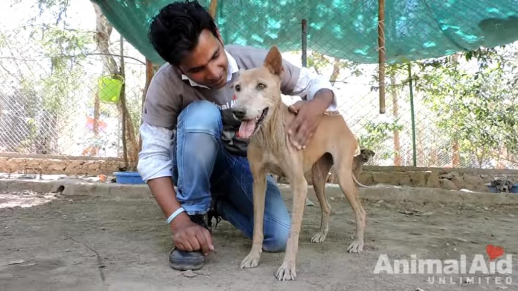 save stray dog