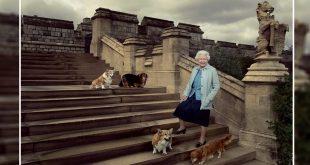 UK Queen Elizabeth Adopts New Corgi