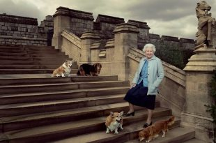 UK Queen Elizabeth Adopts New Corgi