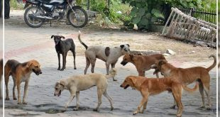 seven stray dogs