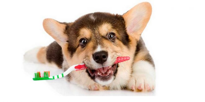 3 Common Dog Mouth Diseases