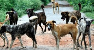 ABC Programme To Curb Stray Dog Menace