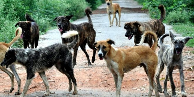 ABC Programme To Curb Stray Dog Menace