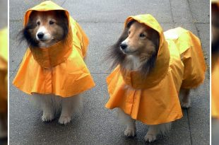 Common Diseases In Dogs During Rainy Season