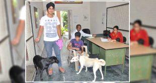 Pet Dogs Registration in Amritsar