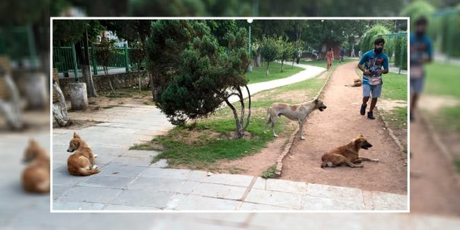 Stray Dogs Scare In Public Parks