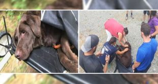 Volunteers Save A Dog Stuck On A Mountain
