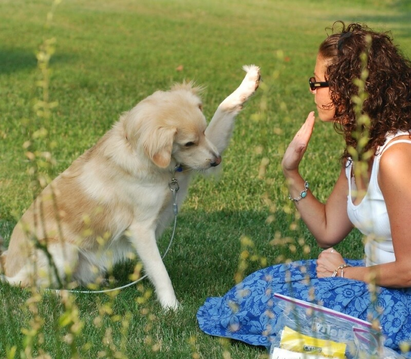 Giving your dog your full attention helps improve contact