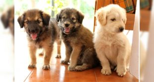 Indian stray dogs up for adoption