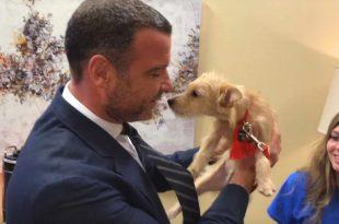 Liev Schreiber Adopts Two Dogs