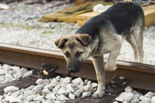 Motorman Stops A Train To Save Dog