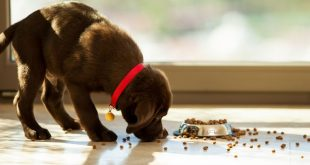 most nutritious puppy food