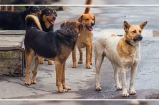 dog Bite Victims