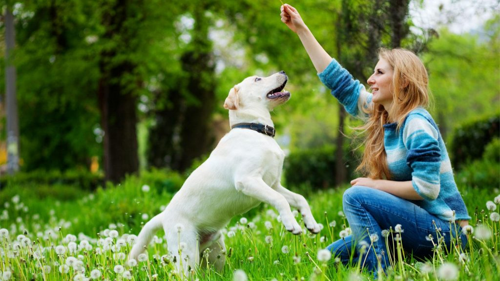 Training Makes the Dog Happy