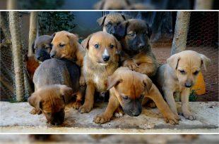 Dog Cuddling Service