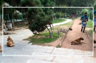 Stray dog meance in Mohali