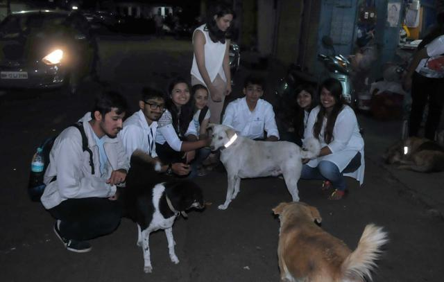 Collars for stray dogs